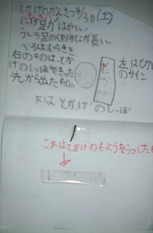 tokage_resize1.jpg